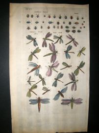 Merian & Jonston C1660 Folio Hand Col Print. Insects, Flies